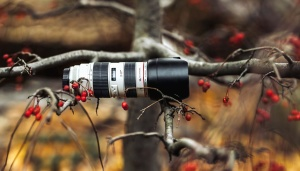 photo camera, field, lens, branches, equipment, wood