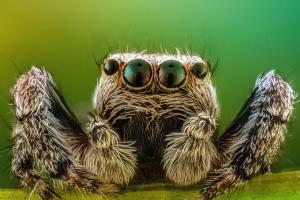 паяк, членестоноги, природа, насекоми, крака, очи
