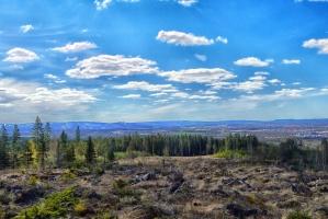 Foresta, cielo, rocce, paesaggio, montagne, nubi, conifera