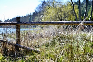 wood, fence, grass, lake, wood, forest