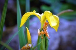 Blume, blumenblatt, pflanze, garten, natur