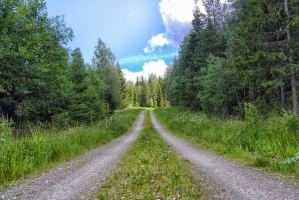 dirt road, forest, evergreen, fir, mountains, sky