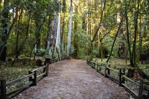รั้ว ไม้ ถนน ป่า ธรรมชาติ ใบ