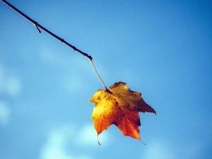 leaf, branch, sky, autumn