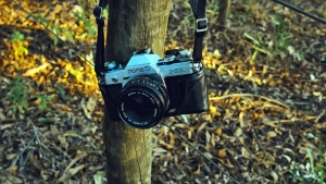 forest, photo camera, lens, nature, equipment