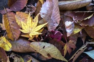 Départ, automne, sec, nature, forêt