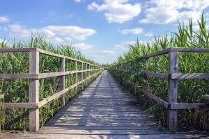 ξύλο, φράχτη, αγρόκτημα, χωριό, ουρανός, φυτών, φύλλα