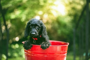 dog, bucket, head, fur, pet