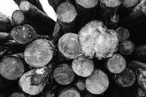 wood, trees, pile, texture