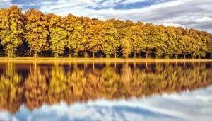 őszi, erdő, folyó, fák, ég, a táj