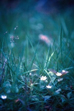 leaves, grass, flower, field, nature