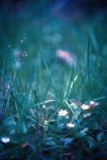 Hojas, hierba, flor, campo, naturaleza