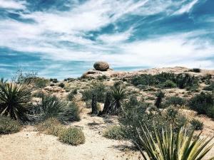 desert, landscape, plants, cactus, leaves, sky, dry, rock