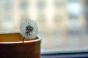 dandelion, still life, cup, plant, seed