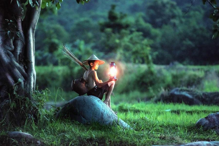 dječak, žarulje, polje, trave, šume, torba, šešir