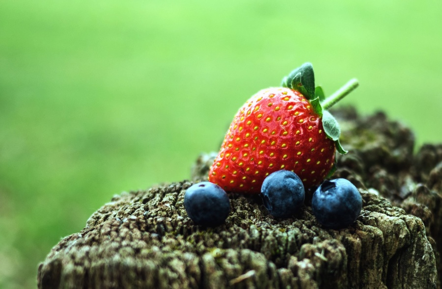 strawberries, blueberries, tree, fruit, nature, garden