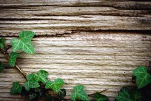 Madera, pared, textura, hiedra, hoja, planta