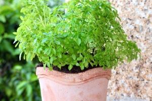 γλάστρα, κεραμική, εδάφους, φυτών, φύλλα