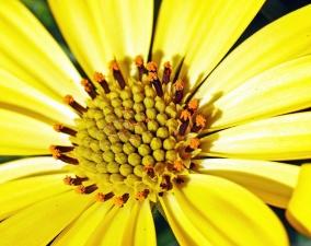 virág, pollen, szirmok, természet, a kert, a bibe
