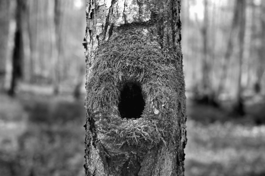 древесина, кора, лес, гнездо
