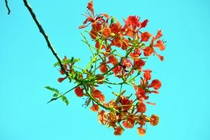 Flores, florecimiento, rama, árbol, naturaleza