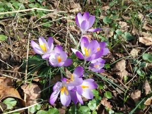 blomst, hage, løv, jord, tørr, våren