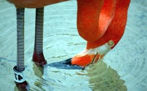 клюв, птицы, вода, экзотические, тропический, ноги, палец