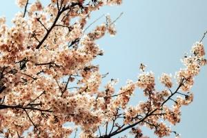 wood, branch, flowering, sky, spring