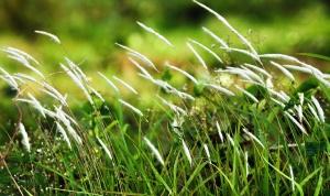 felt, høje græs, blade