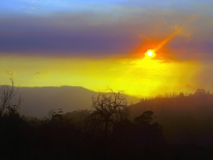 tree, mountain, sky, Sun, sunrise, forest