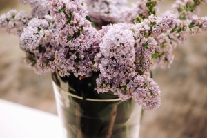 lilac, flower, flowering, flowerpot, water