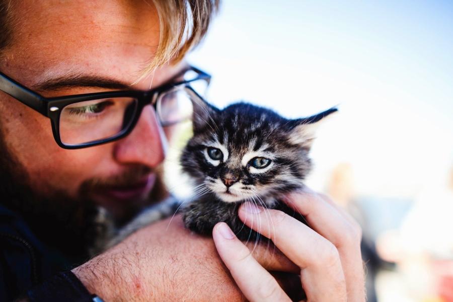 eyeglasses, cat, man, pet, head