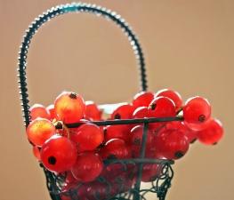 Cassis, fruit, panier, juteux, sain, baies