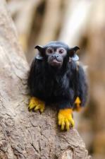 apina, eläimet, villi, metsä