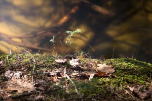 leaves, forest, moss
