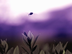 fly, insect, leaf, garden, flight, nature