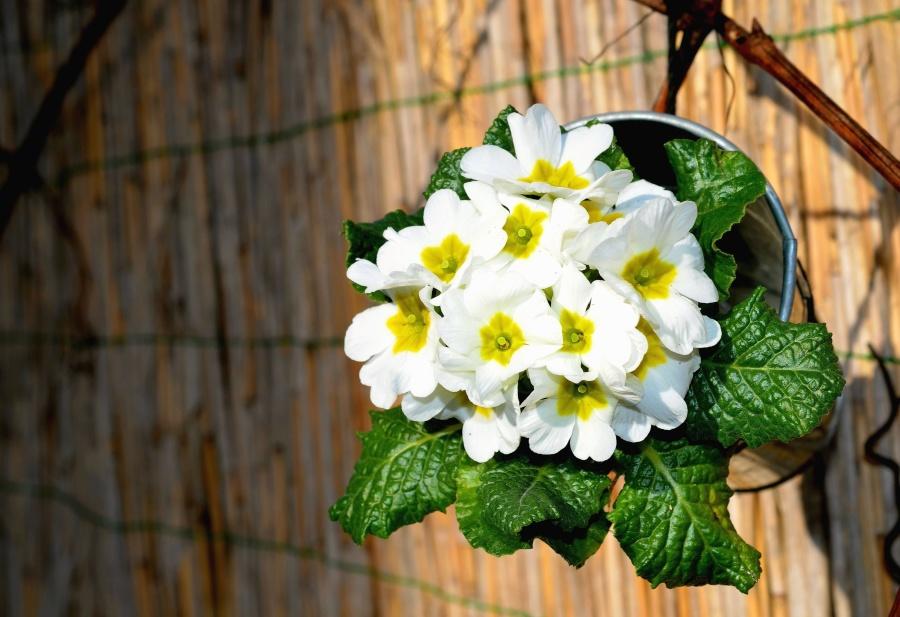 květ, list, Zátiší