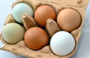 egg, chicken, box, cardboard, organic