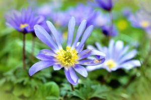 Blume, garten, natur, blumenblätter, frühling
