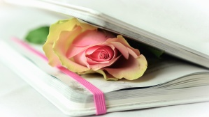 rose, book, petals, cover, sheet, paper