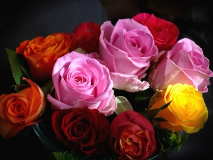 バラ、カラー、カラフル、花びら、花束します。