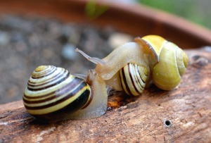 snail, shell, invertebrate, wood, forest, animal