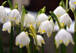 Fiore, primavera, pianta, petalo, giardino