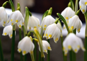 Flor, primavera, planta, pétalo, jardín