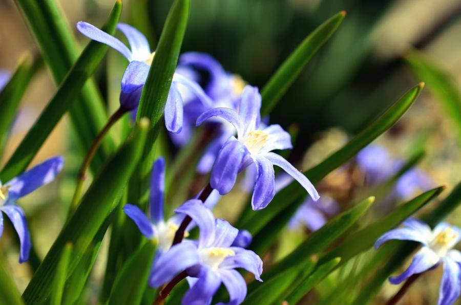 flower, plant, nature, garden, spring