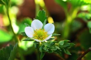 flower, petals, leaf, plant, spring