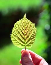 Hand, Blatt, Natur, Park, Finger