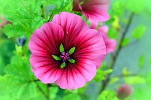 λουλούδι, fpetals, άνοιξη, κήπο, φύση, φυτό