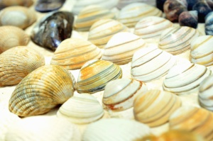 sea, invertebrate, seashell, sand, colors, colorful, texture