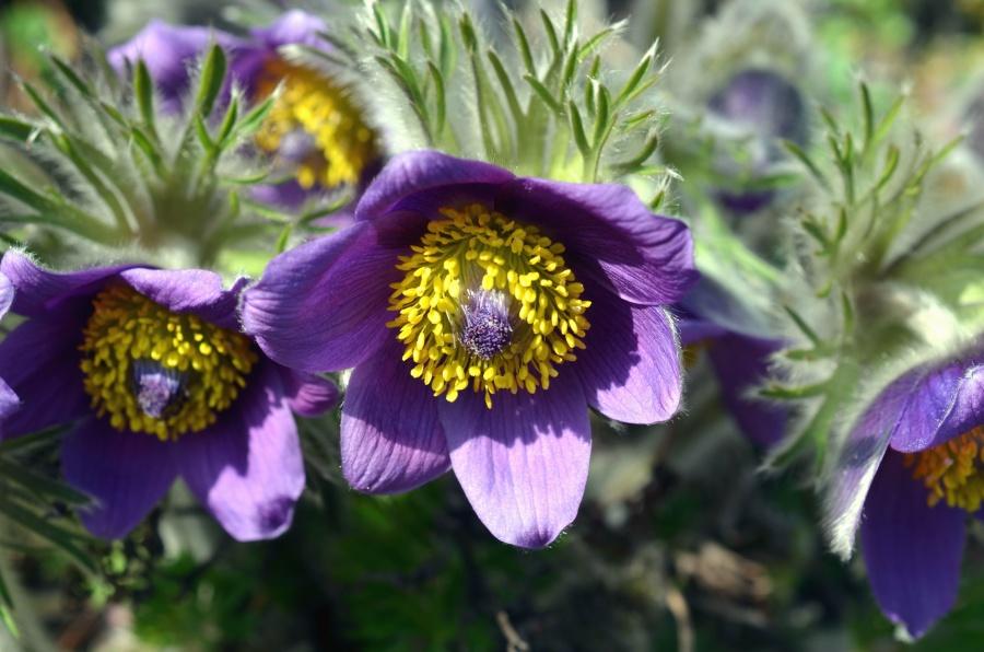flower, nature, bloom, garden, leave, petal